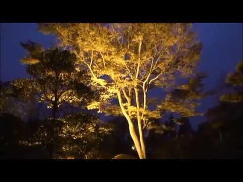 桜山公園(群馬) | 2018年紅葉ライトアップ情報