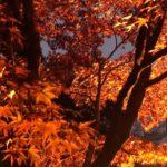 尾関山公園(広島) | 2020年紅葉ライトアップ・見頃情報
