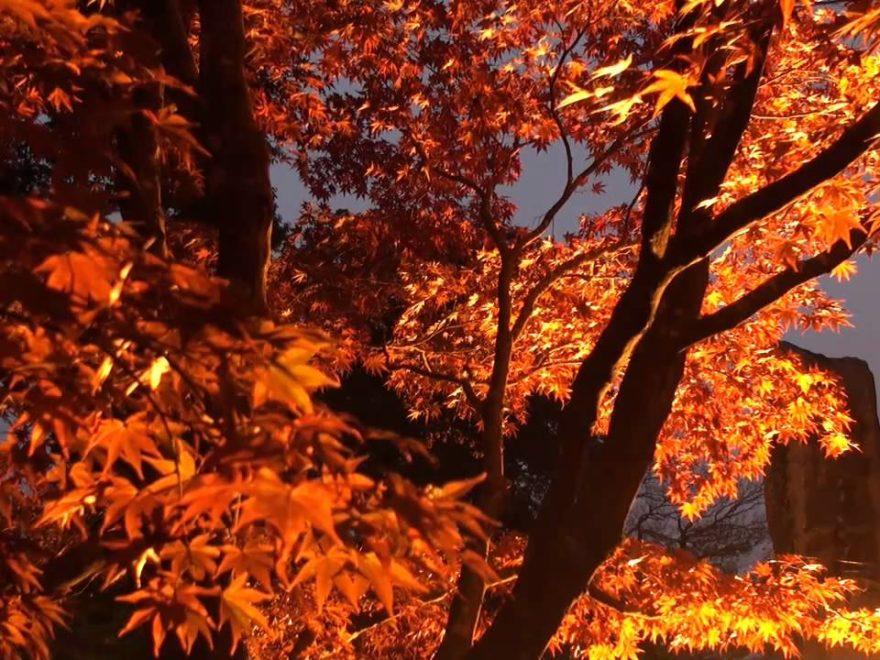 尾関山公園(広島) | 2018年紅葉ライトアップ情報