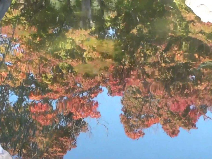 松山城 二之丸史跡庭園(愛媛) | 2018年紅葉ライトアップ情報
