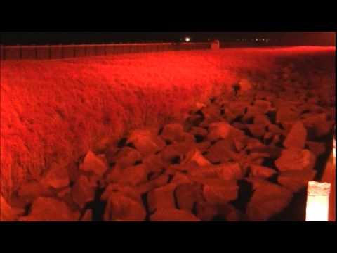 干潟よか公園(東与賀海岸)・シチメンソウ群生地(佐賀) | 2018年紅葉ライトアップ情報