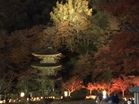 金剛院・鹿原公園(京都) | 2018年紅葉ライトアップ情報
