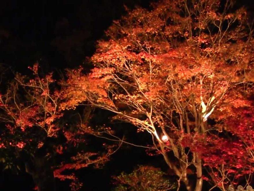 隨心院(京都) | 2018年紅葉ライトアップ情報
