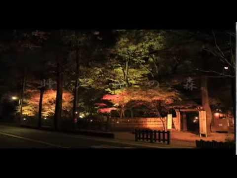 睡足軒(埼玉) | 2018年紅葉ライトアップ情報