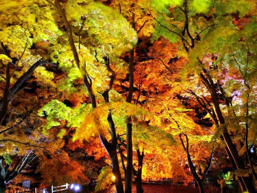 御殿山公園(栃木・大田原) | 2018年紅葉ライトアップ情報