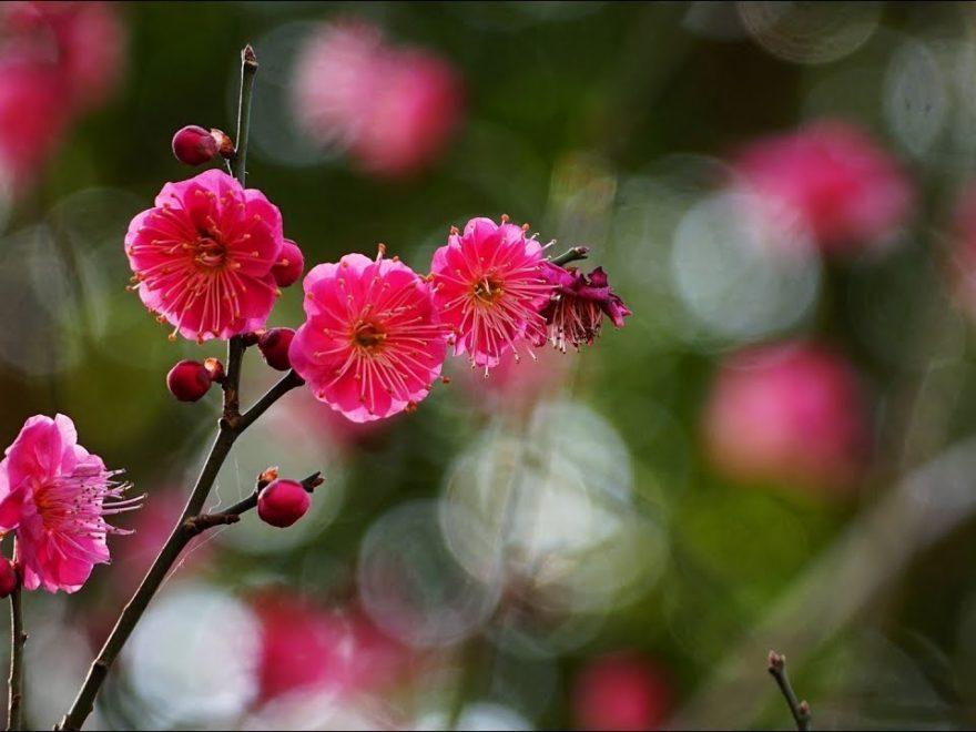 三溪園(神奈川) | 2019年梅まつり・見頃情報