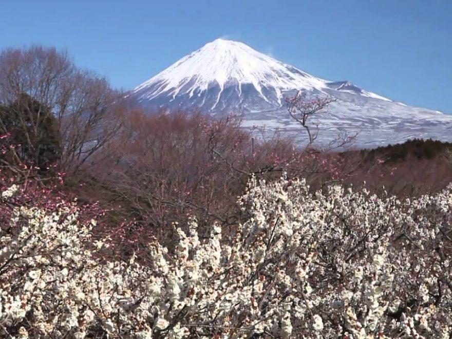 岩本山公園(静岡) | 2019年梅まつり・見頃情報