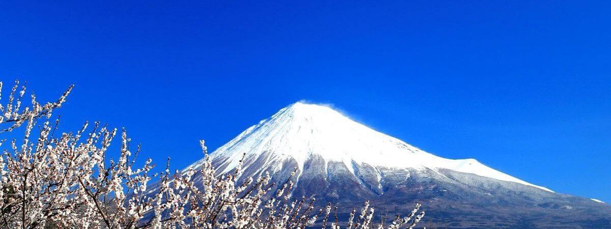 岩本山公園_梅富士_cover