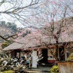 【イベント中止】京王百草園(東京) | 2020年梅まつり・見頃情報