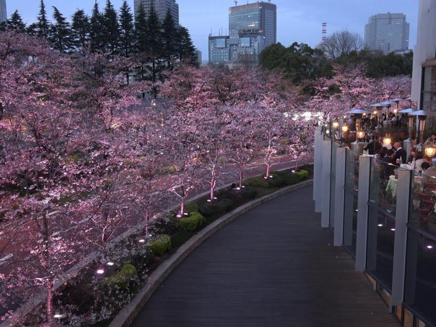 東京ミッドタウン(東京) | 2019年夜桜ライトアップ・見頃情報