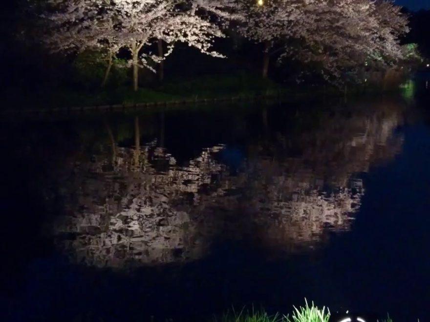 三渓園(神奈川) | 2019年夜桜ライトアップ・見頃情報