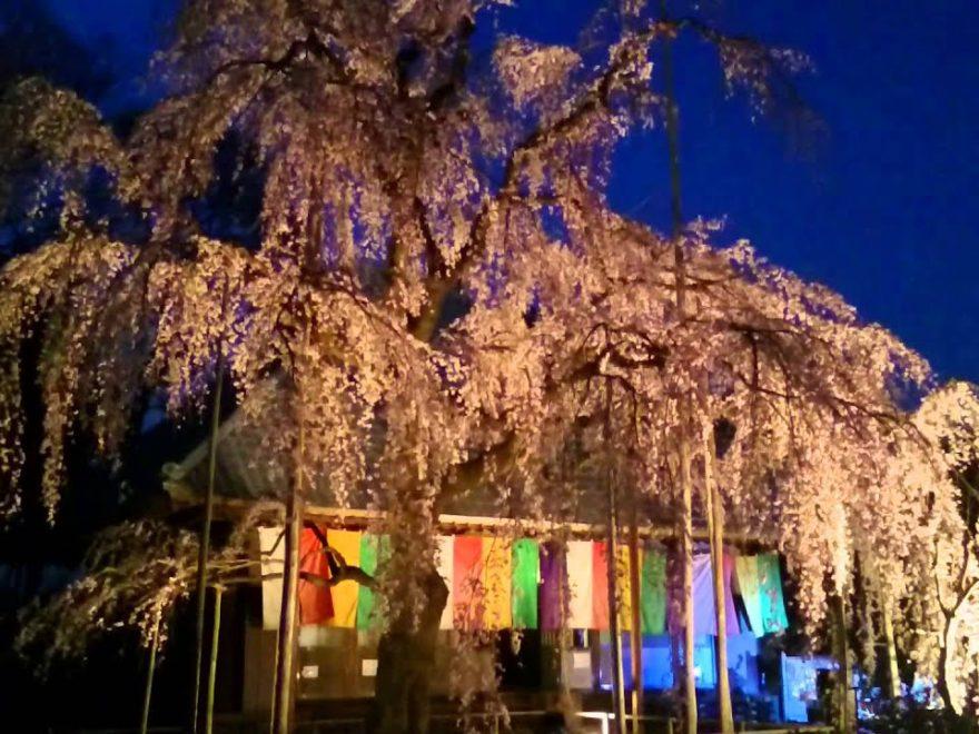 慈眼寺(埼玉) | 2019年夜桜ライトアップ・見頃情報