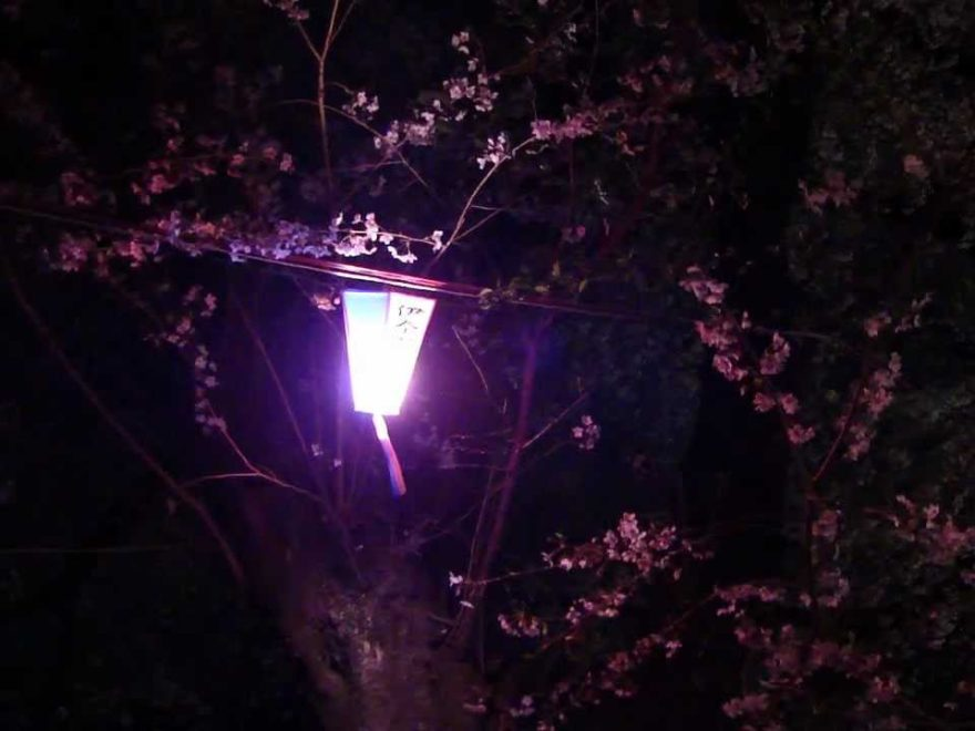 伊奈町 無線山の桜並木(埼玉) | 2019年夜桜ライトアップ・見頃情報