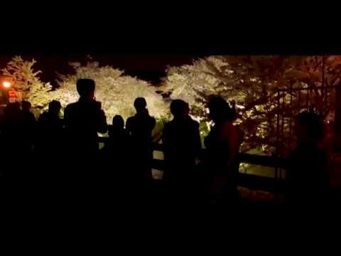 琵琶湖疏水(滋賀) | 2019年夜桜ライトアップ・見頃情報