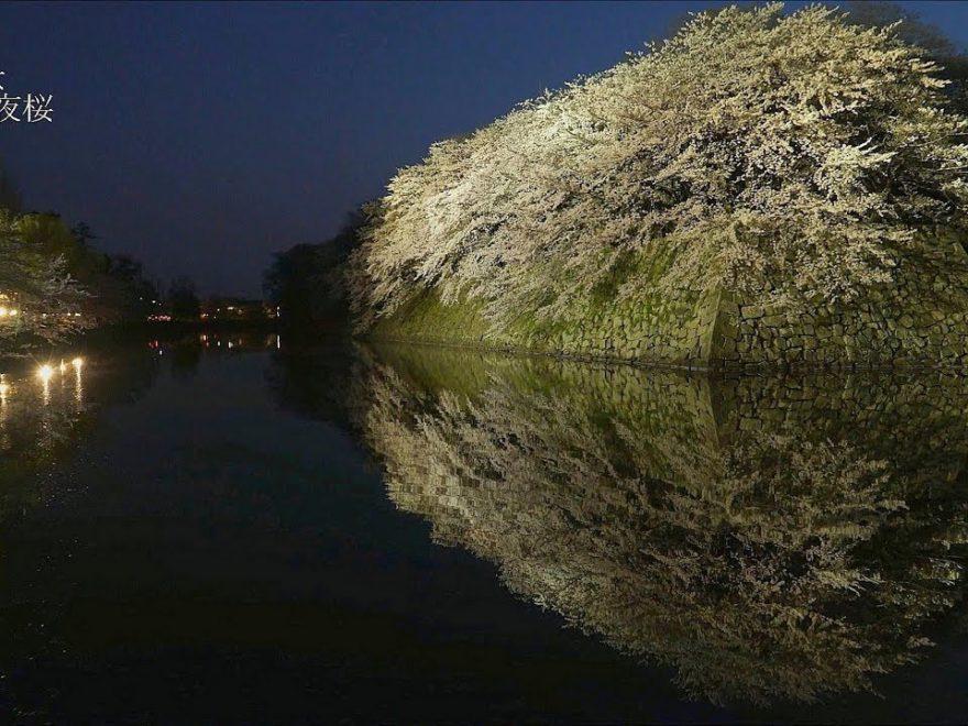 国宝 彦根城(滋賀) | 2019年夜桜ライトアップ・見頃情報