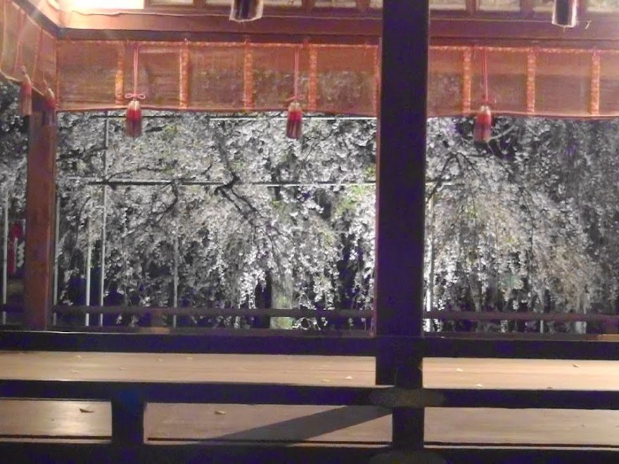 平野神社(京都) | 2019年夜桜ライトアップ・見頃情報