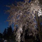 二条城(京都) | 2019年夜桜ライトアップ・見頃情報