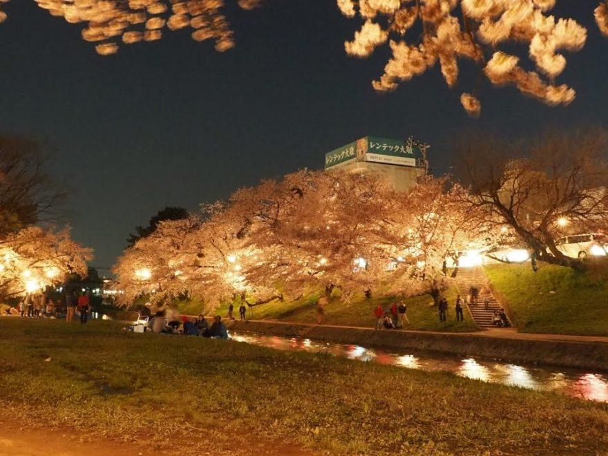 岡崎公園(愛知) | 2019年夜桜ライトアップ・見頃情報