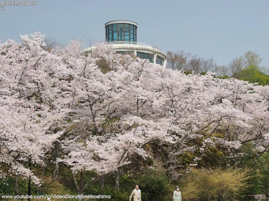 広島市植物公園(広島) | 2019年夜桜ライトアップ・見頃情報
