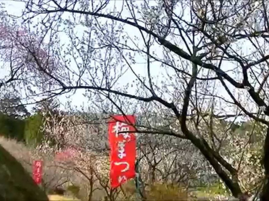 津山市神代 梅の里公園(岡山) | 2019年梅まつり・見頃情報