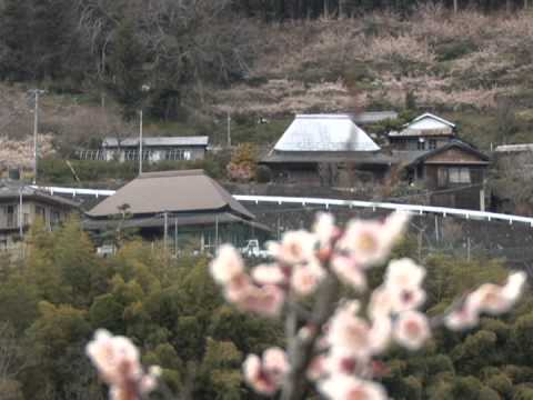 阿川梅の里(徳島) | 2019年梅まつり・見頃情報