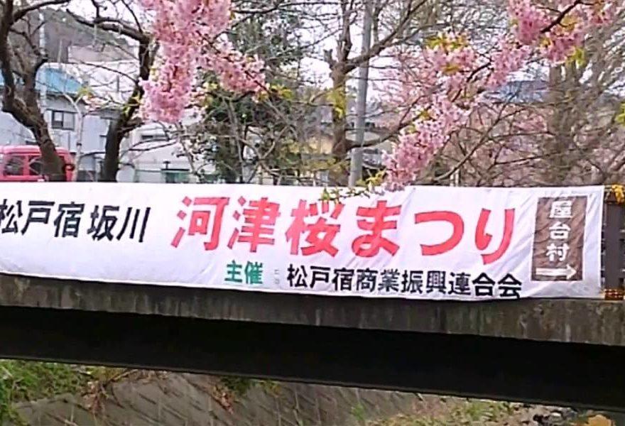 坂川(松戸・千葉) | 2019年夜桜ライトアップ・見頃情報
