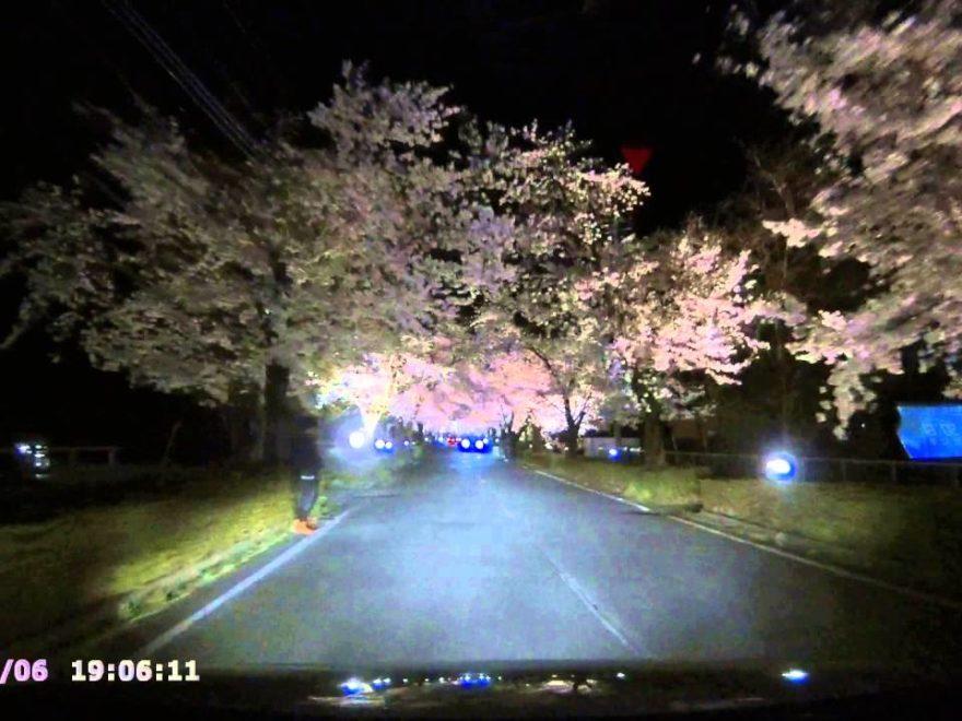 長瀞周辺(埼玉) | 2019年夜桜ライトアップ・見頃情報