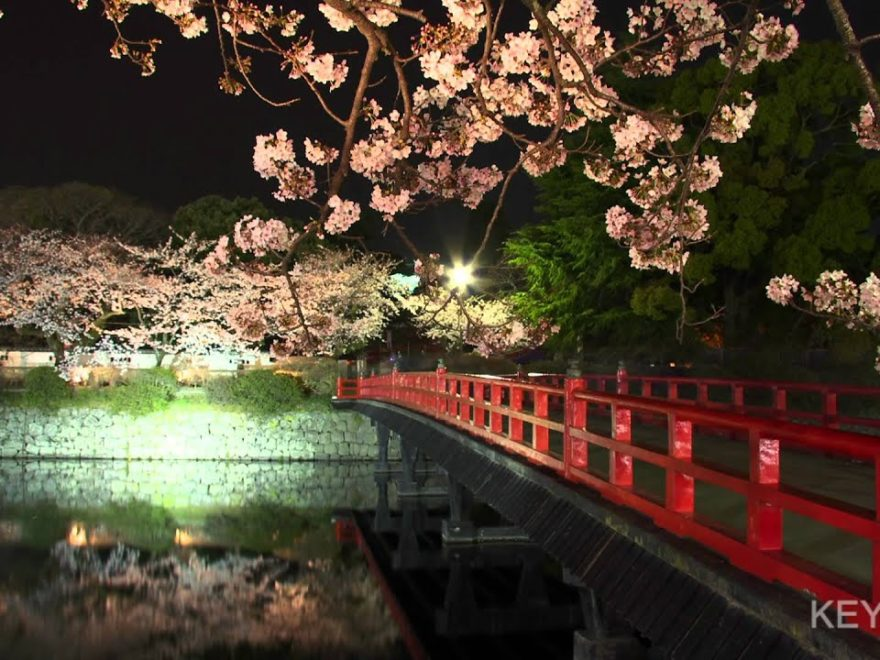 小田原城址公園・本丸広場(神奈川) | 2019年夜桜ライトアップ・見頃情報
