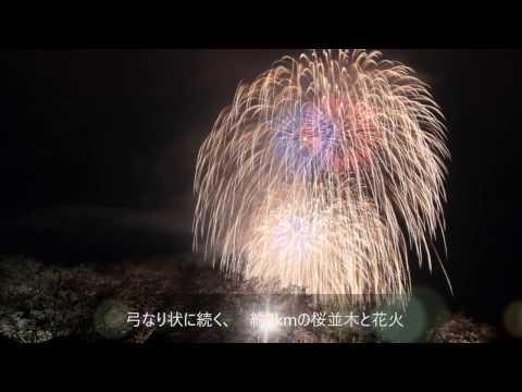 都幾川桜堤(埼玉) | 2019年夜桜ライトアップ・見頃情報