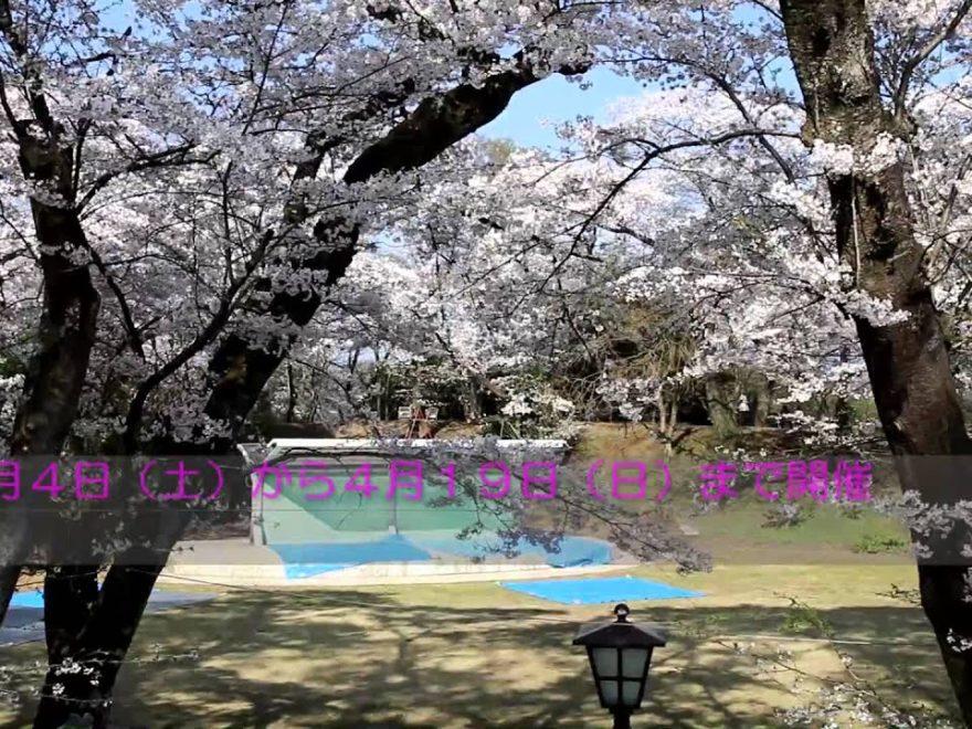 大田原市 龍城公園(栃木) | 2019年夜桜ライトアップ・見頃情報