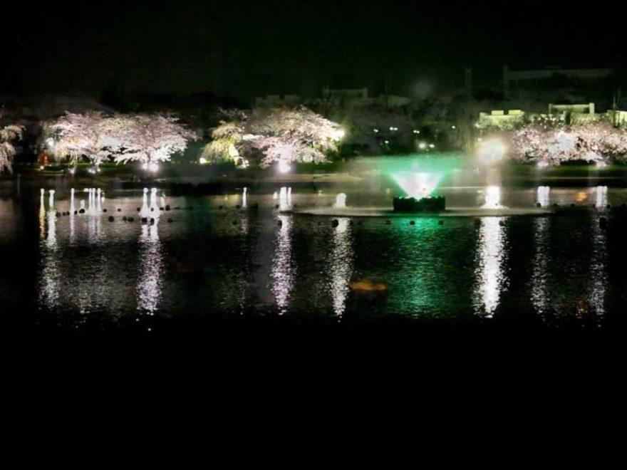 千波湖(茨城) | 2019年夜桜ライトアップ・見頃情報