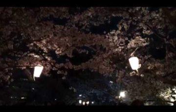 亀城公園/土浦城址(茨城)   2019年夜桜ライトアップ・見頃情報