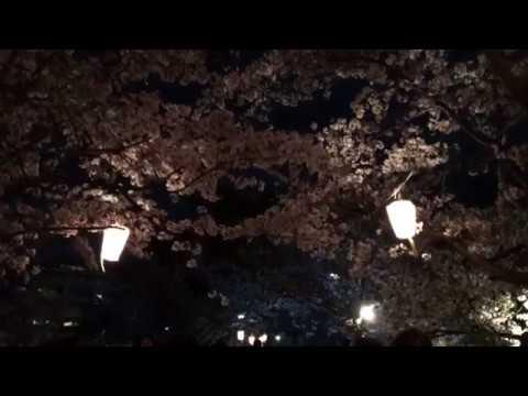 亀城公園/土浦城址(茨城) | 2019年夜桜ライトアップ・見頃情報