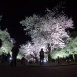 【変更・中止】万博記念公園(大阪) | 2021年桜祭り・夜桜ライトアップ・見頃情報