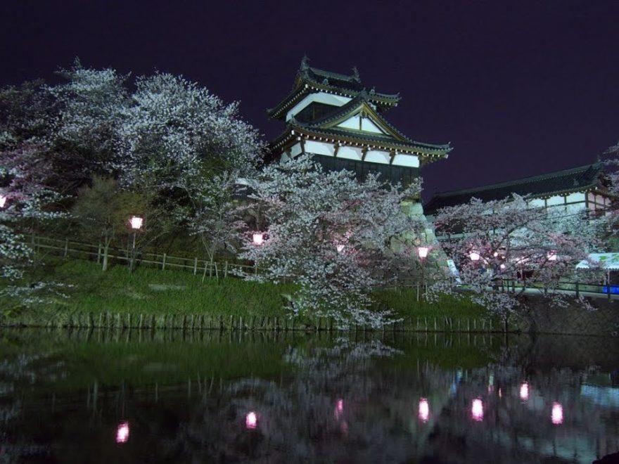 郡山城跡(奈良) | 2019年夜桜ライトアップ・見頃情報