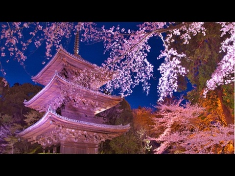 三井寺(園城寺)(滋賀) | 2019年夜桜ライトアップ・見頃情報
