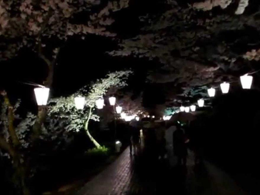 千光寺公園(広島) | 2019年夜桜ライトアップ・見頃情報