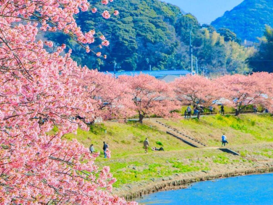 みなみの桜と菜の花まつり_cover