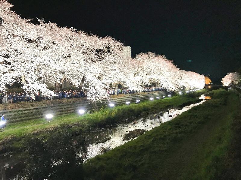 野川ライトアップ_004