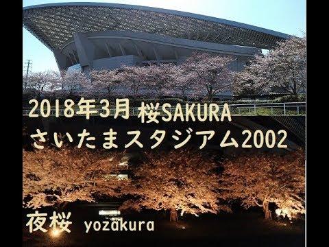 埼玉スタジアム2002公園(埼玉) | 2019年夜桜ライトアップ・見頃情報