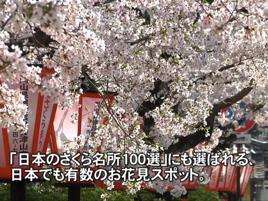 津山城(鶴山公園)(岡山) | 2019年夜桜ライトアップ・見頃情報