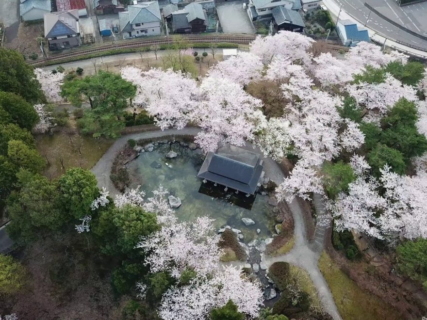 鯖江市 西山公園(福井) | 2019年夜桜ライトアップ・見頃情報
