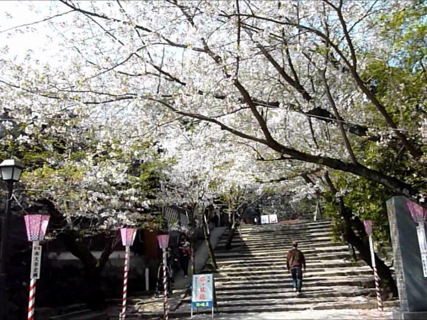 大村公園(長崎) | 2019年夜桜ライトアップ・見頃情報
