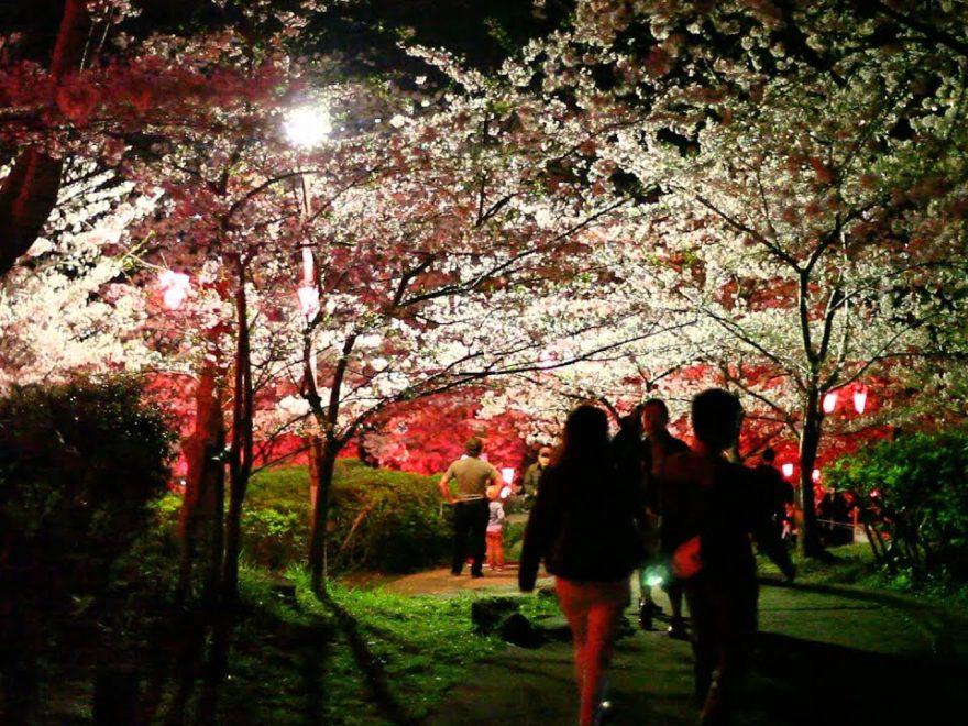 長崎市 立山公園(長崎) | 2019年夜桜ライトアップ・見頃情報