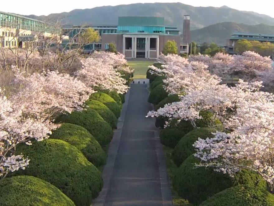鏡野公園(高知) | 2019年夜桜ライトアップ・見頃情報