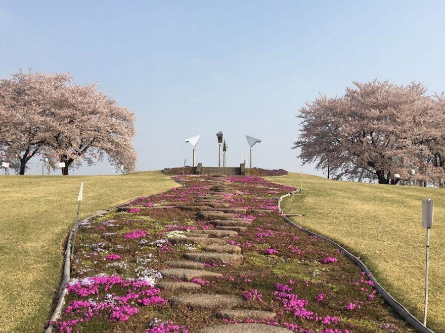 藤岡市 ふじの咲く丘(栃木) | 2019年夜桜ライトアップ・見頃情報