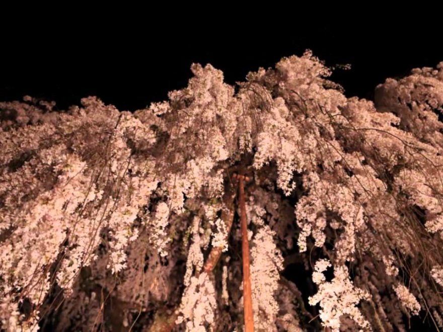 宇陀市 大野寺(奈良) | 2019年夜桜ライトアップ・見頃情報