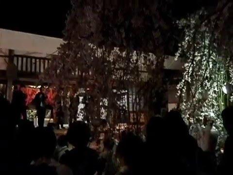 吉田のしだれ桜(瑠璃寺)(京都) | 2019年夜桜ライトアップ・見頃情報