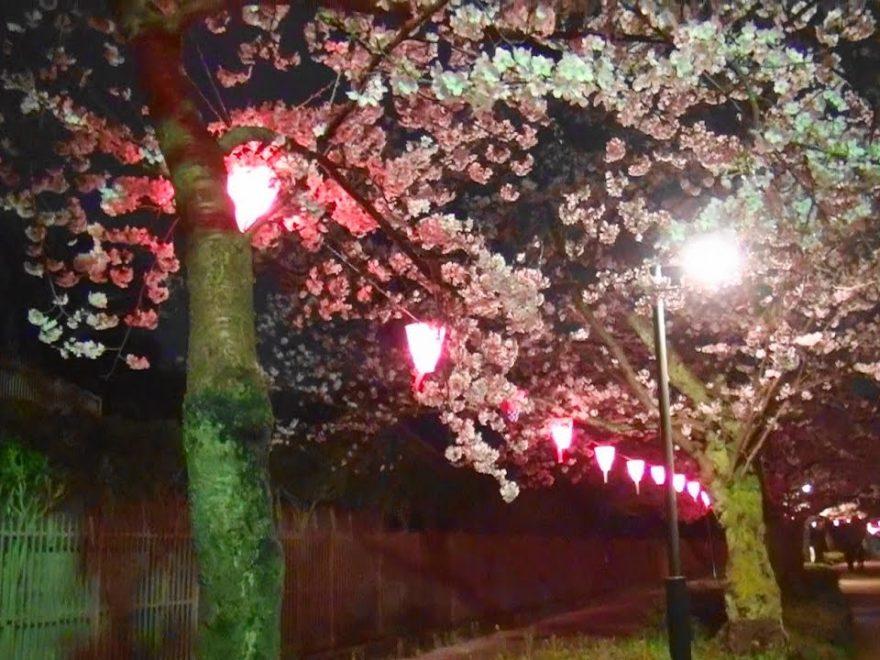 高岡古城公園(富山) | 2019年夜桜ライトアップ・見頃情報