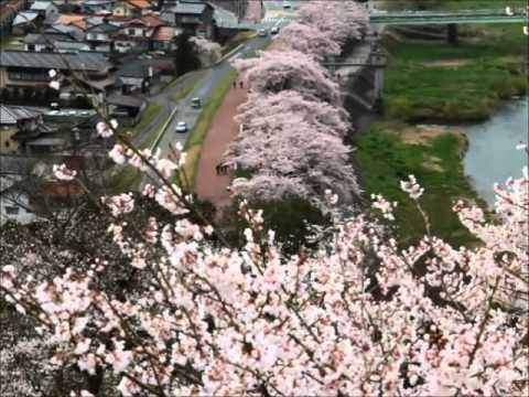 尾関山公園(広島) | 2019年夜桜ライトアップ・見頃情報
